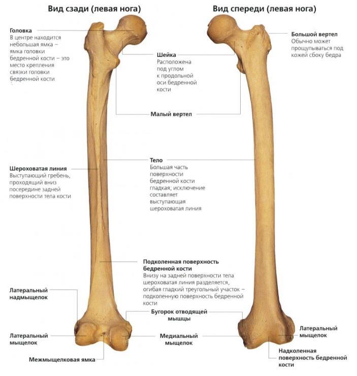 Классификация и проявления переломов бедренной кости