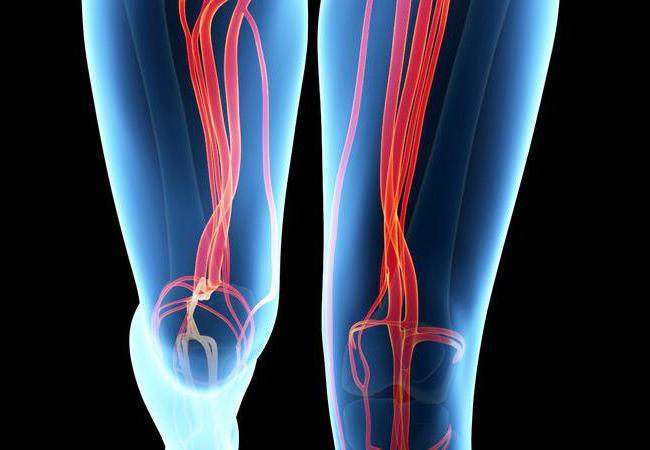 Анатомия бедренной артерии