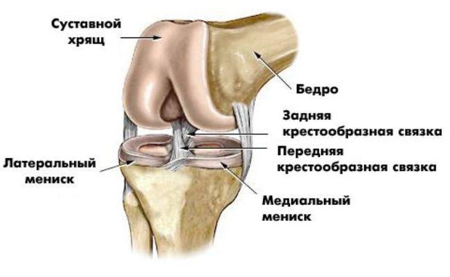 Название и анатомические особенности задней части колена