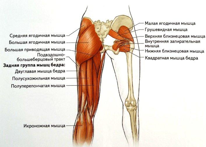 Упражнения для растяжки задней поверхности бедра