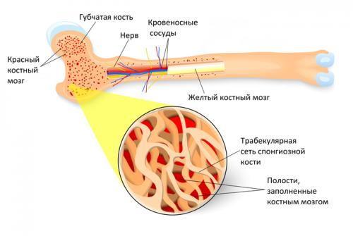 Виды, диагностика и лечение остеомы кости