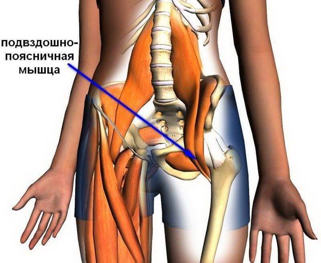 Анатомия мышц таза и бедра
