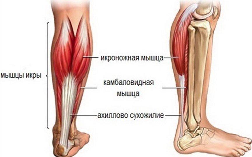 Причины и лечение боли в икроножных мышцах