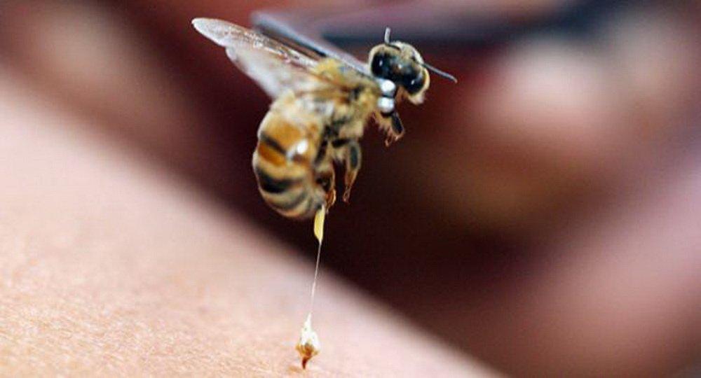 Чем лечить отек и покраснение ноги после укуса насекомого?